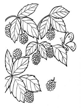 Blackberry-berries-coloring-pages-1