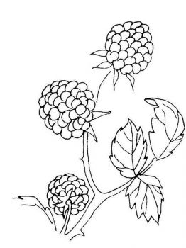 Blackberry-berries-coloring-pages-3