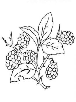 Blackberry-berries-coloring-pages-4