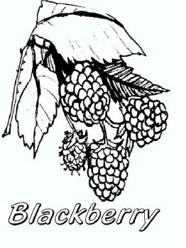 Blackberry-berries-coloring-pages-7