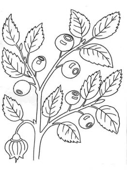 Blueberry-berries-coloring-pages-1