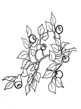 Blueberry-berries-coloring-pages-3