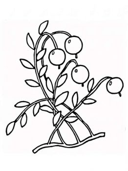 Cowberry-berries-coloring-pages-1
