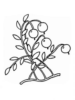 Cranberry-berries-coloring-pages-5