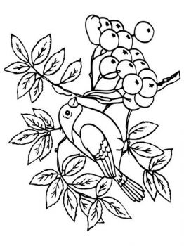 Rowan-berries-coloring-pages-5
