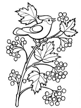 Rowan-berries-coloring-pages-6