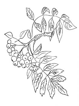 Rowan-berries-coloring-pages-7