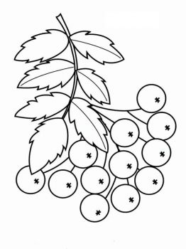 Rowan-berries-coloring-pages-9