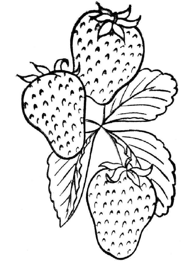 ausmalbilder erdbeere  malvorlagen kostenlos zum ausdrucken