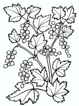 currant-berries-coloring-pages-3