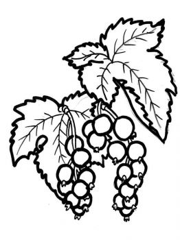 currant-berries-coloring-pages-5