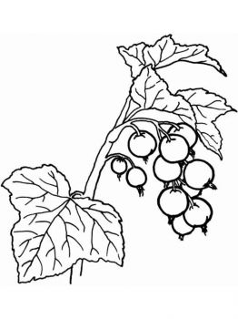 currant-berries-coloring-pages-6