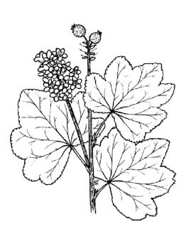 currant-berries-coloring-pages-7