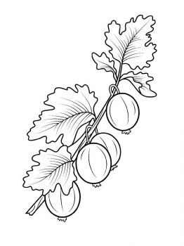 gooseberry-berries-coloring-pages-4