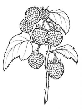 raspberries-berries-coloring-pages-10