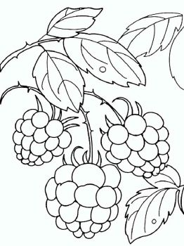 raspberries-berries-coloring-pages-11