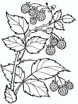 raspberries-berries-coloring-pages-2