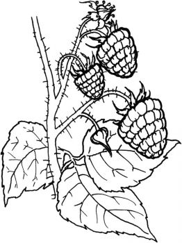 raspberries-berries-coloring-pages-4