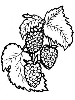 raspberries-berries-coloring-pages-6