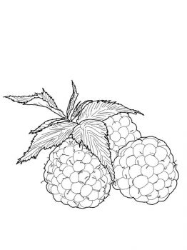 raspberries-berries-coloring-pages-8