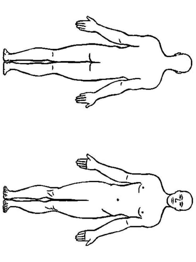 ausmalbilder menschlicher körper  malvorlagen kostenlos