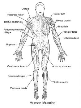 educational-human-body-coloring-pages-12