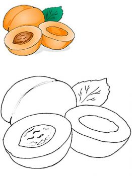 Apricot-fruits-coloring-pages-1