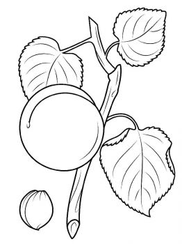 Apricot-fruits-coloring-pages-11