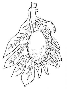 Breadfruit-fruits-coloring-pages-3