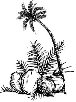 Coconut-fruits-coloring-pages-2