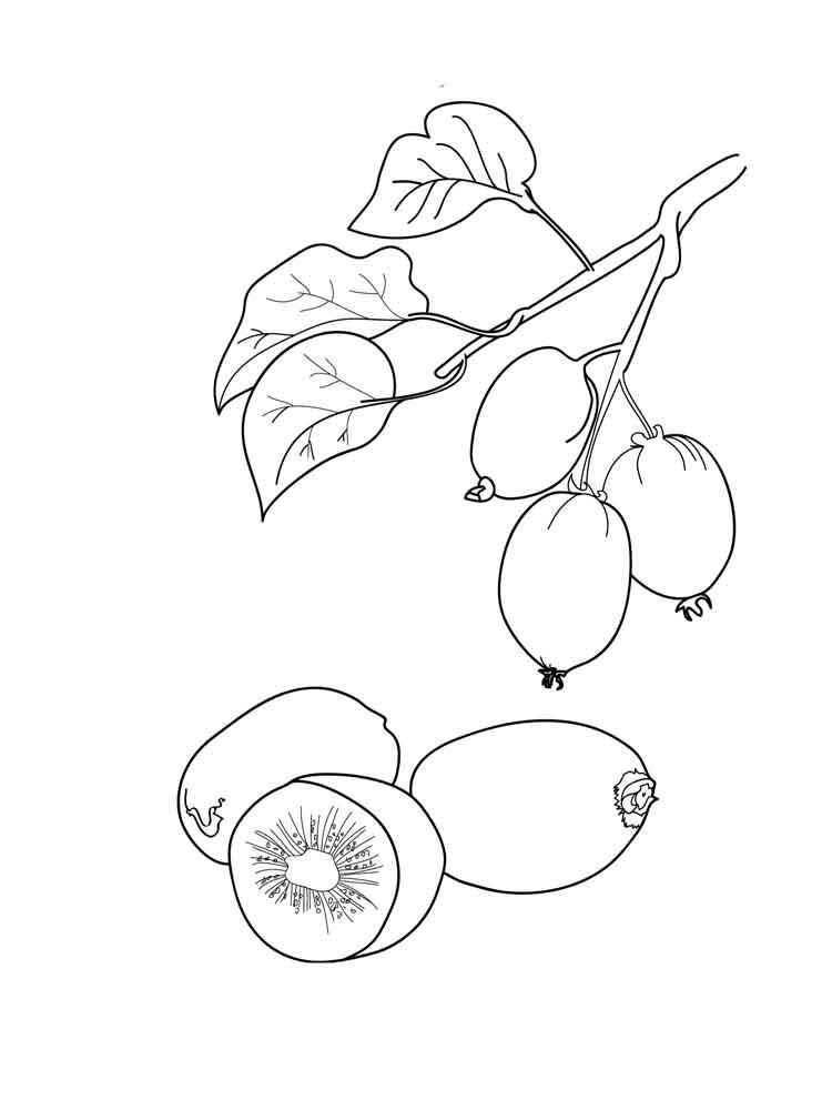 malvorlagen kiwi obst - ausmalbilder kostenlos zum ausdrucken