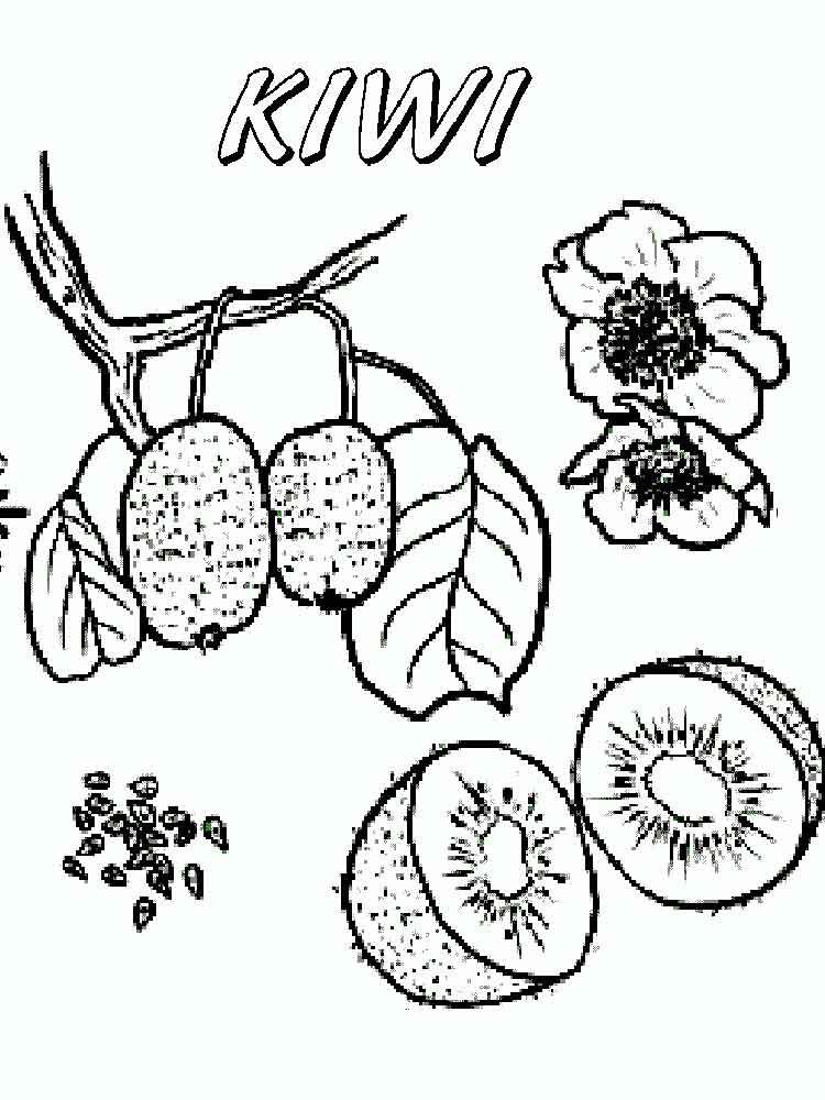 malvorlagen kiwi obst  ausmalbilder kostenlos zum ausdrucken