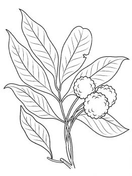 Lychee-fruits-coloring-pages-2