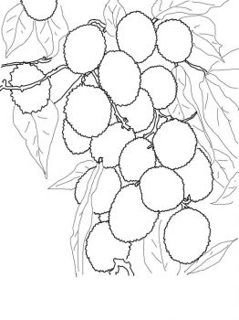 Lychee-fruits-coloring-pages-9
