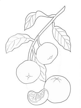 Mandarin(Tangerine)-fruits-coloring-pages-7