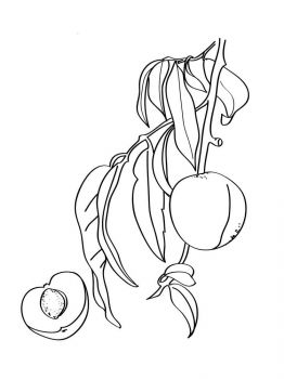 Peach-fruits-coloring-pages-10