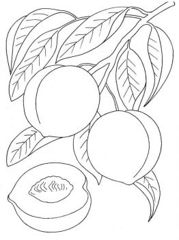 Peach-fruits-coloring-pages-2