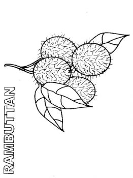 Rambutan-fruits-coloring-pages-1