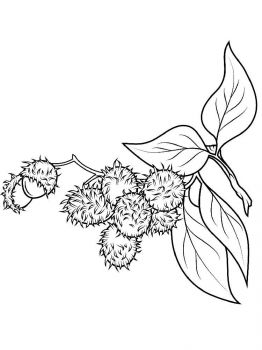 Rambutan-fruits-coloring-pages-8