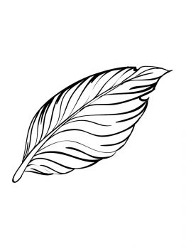 Feathers-coloring-pages-20