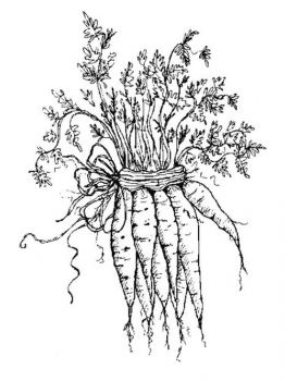 Vegetables-Carrot-coloring-page-10