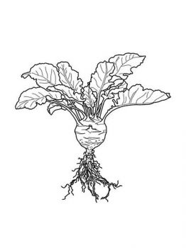 Vegetables-Kohlrabi-coloring-page-2