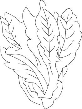 Vegetables-Lettuce-coloring-page-5