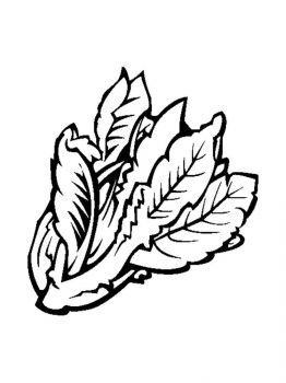 Vegetables-Lettuce-coloring-page-9