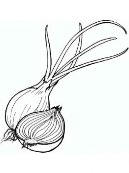 Vegetables-Onion-coloring-page-13