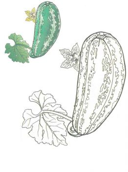 Vegetables-Squash-coloring-page-1