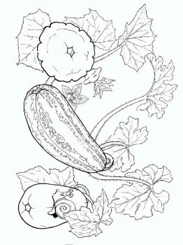 Vegetables-Squash-coloring-page-4