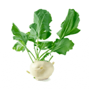 Kohlrabi coloring pages