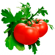 Tomato coloring pages
