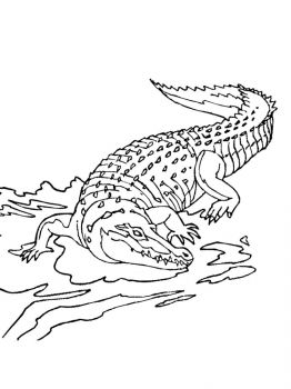 African-Animals-coloring-pages-13